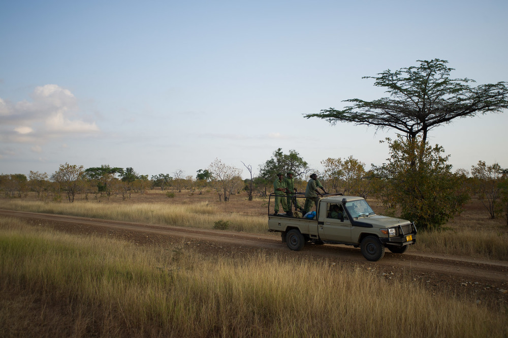 Wildlife rangers are responsible for patrolling near 55,000 square kilometres of the Selous reserve - an area larger than the territory of Switzerland. Poaching is rife within the park, marked by its proximity to the port city of Dar es-Salaam.