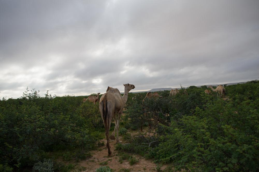 08_PEM_SOM_Livestock_7951.jpg