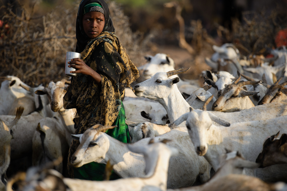 A girl takes a cup of fresh goats milk