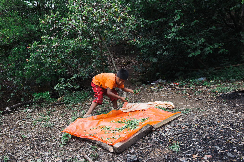 Brandon, 9, lays out coca leaves to dry in a plantation in the village of Coripata in the Los Yungas region of Bolivia. Brandon is too young to legally work, but earns 4 bolivianos per pound of coca leaves picked; generally around 32 bolivianos per day ($4.60 USD), which he gives to his mother.
