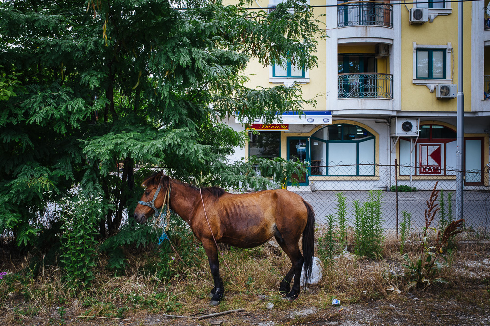 PEM_MKD_Skopje_8744.jpg