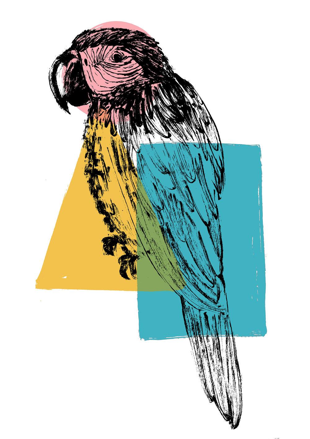 parrot copy.jpg
