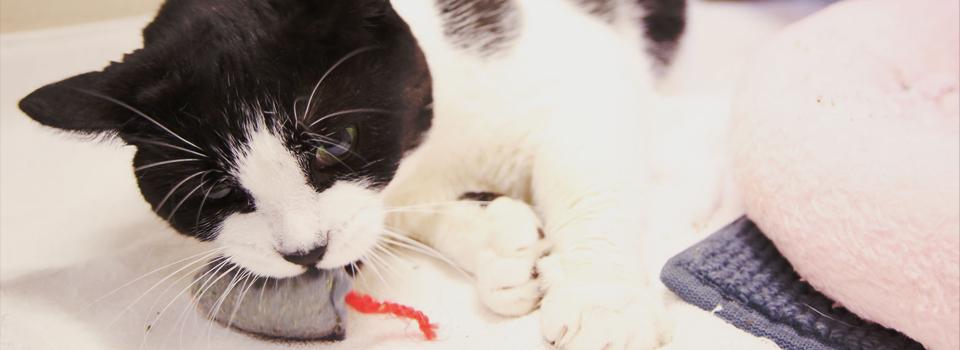 CatBanner1.jpg