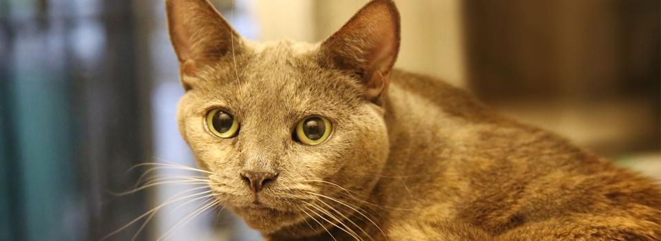 CatBanner2.jpg