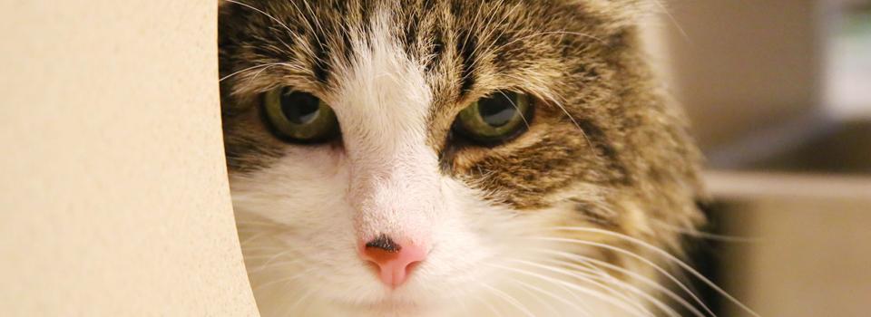 CatBanner3.jpg
