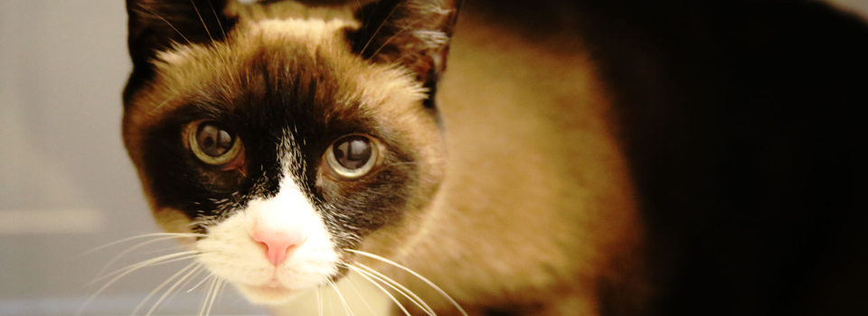 CatBanner5.jpg