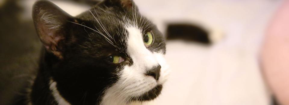 CatBanner6.jpg