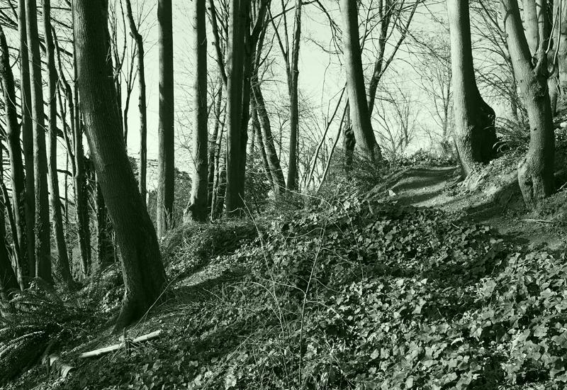 13_0402 Forrest 2 small.jpg
