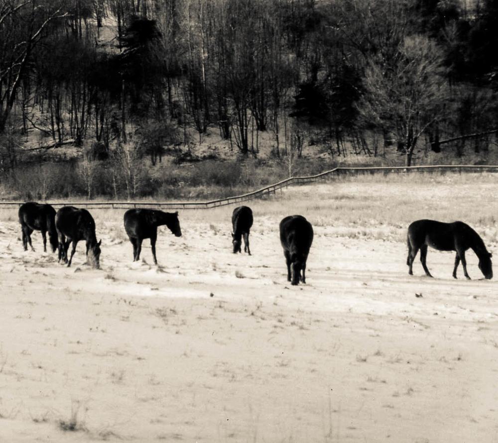 Horse us ny 3
