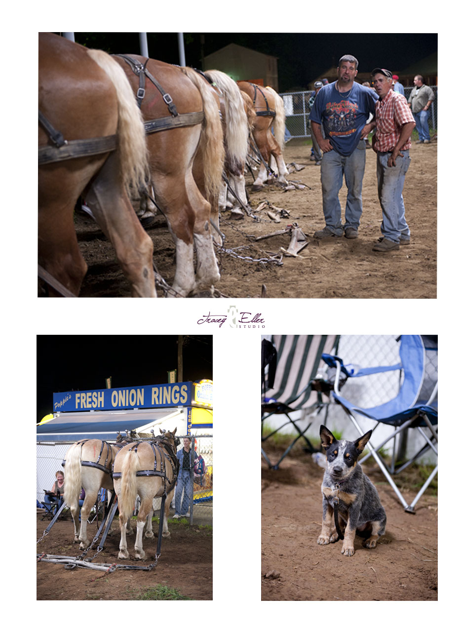 Cummington Fair blog 6