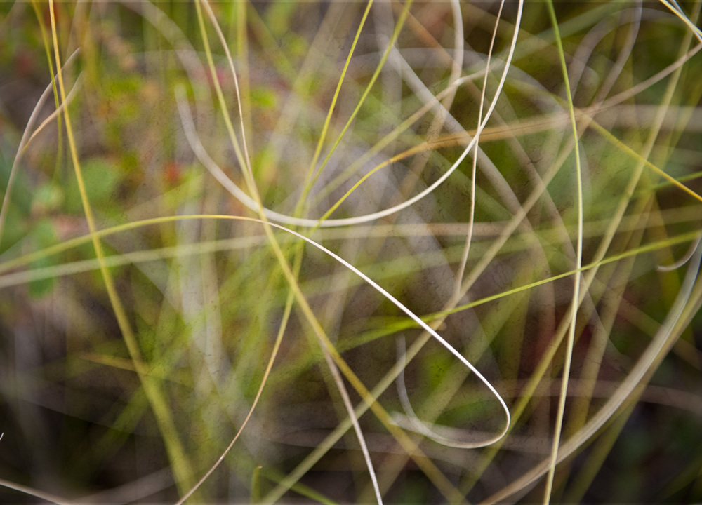 grass abstraction SQ.jpg