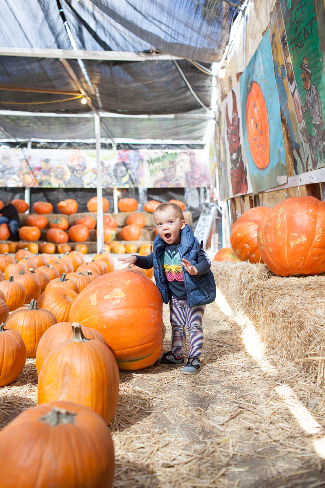Naomi was very excited to see such huge pumpkins!