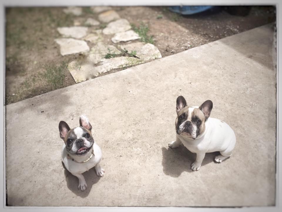 Abby & Dolly