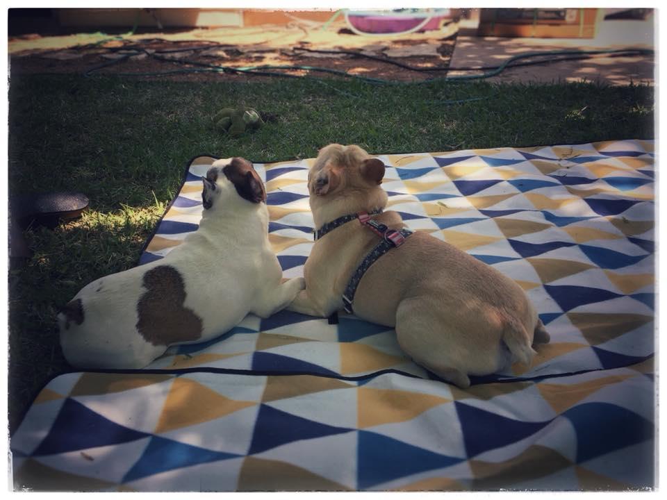 Abby & Rafa.jpg