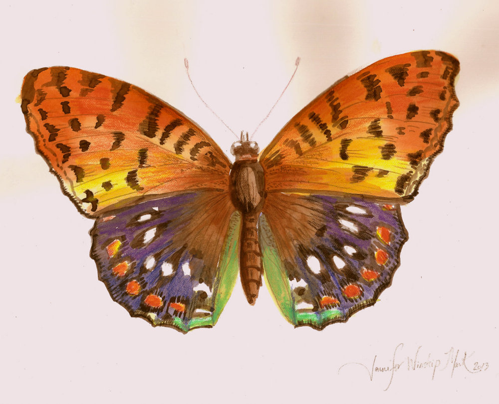 Butterfly IV  /  Watercolor