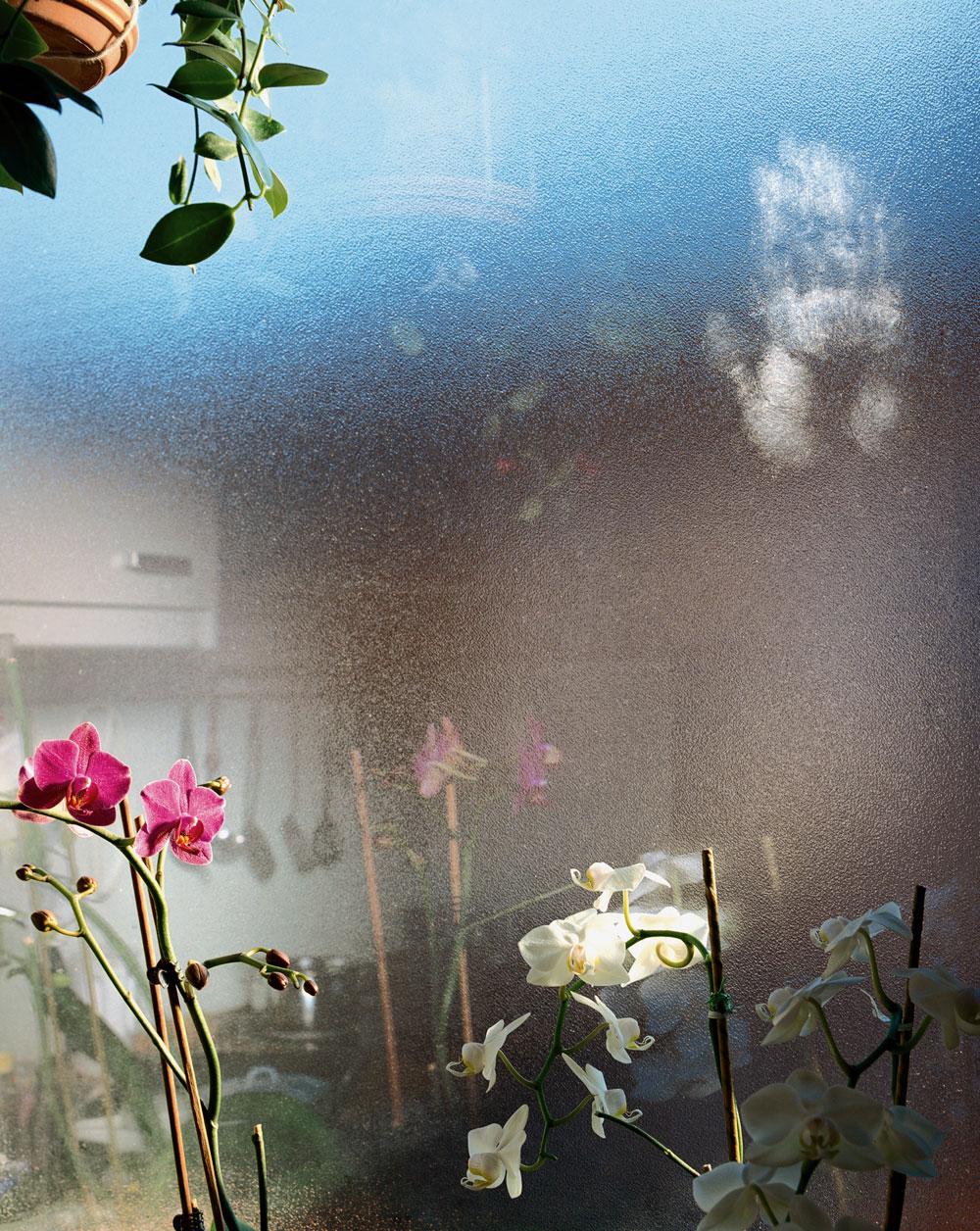 jennilee: Orchids in Salzburg 2006 - Jessica Backhaus