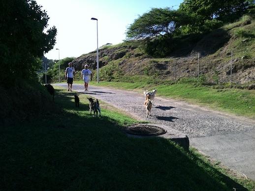 Les Saintes - Andy, Dennis o ett par getter promenerar längs med vägen