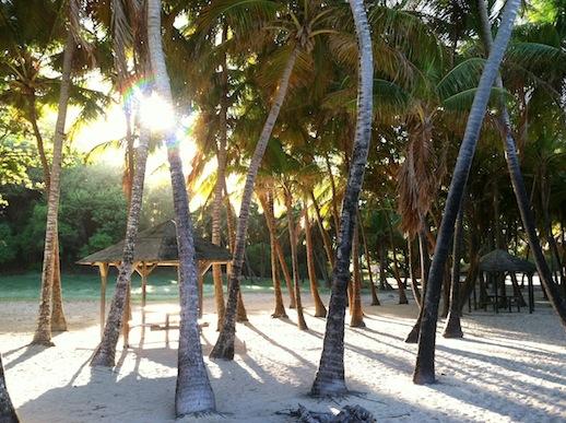 Les Saintes - Fina palmer vid en strand