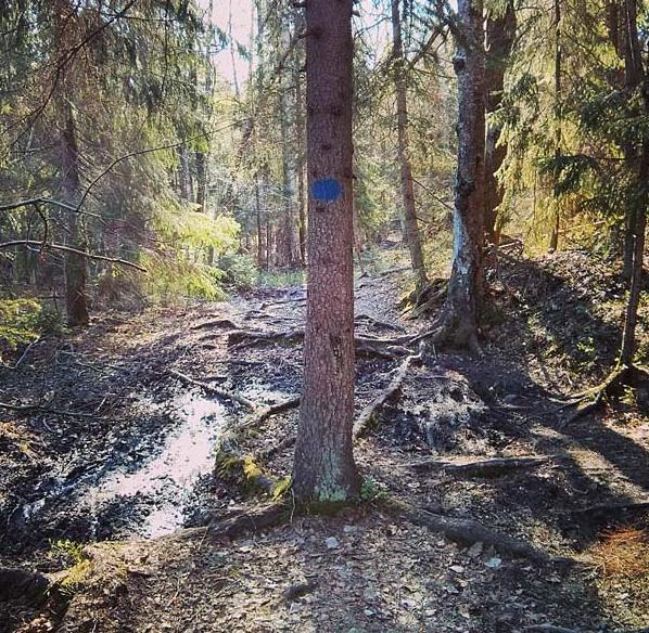 Underbar löpning genom skogen i Nacka! Bild lånad frånhttp://42km.se/då vi inte hade någon kamera med oss.