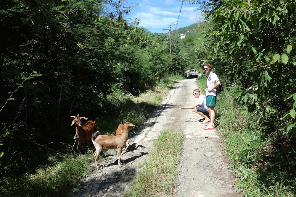 Mötte ett par getter på väg upp till hiken