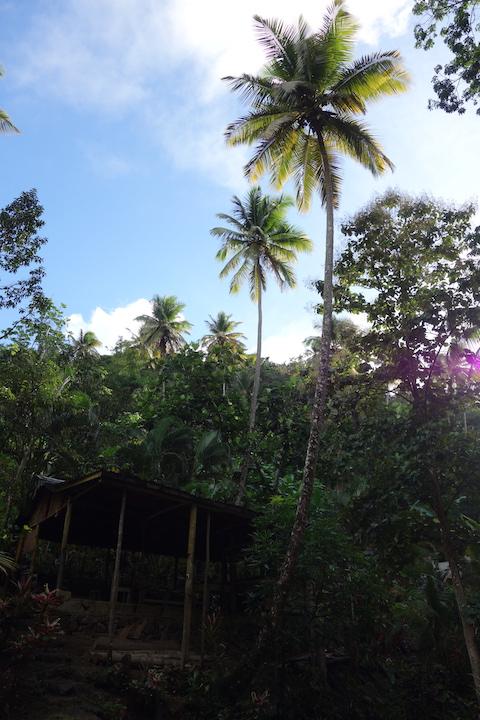 Riktigt höga palmer!
