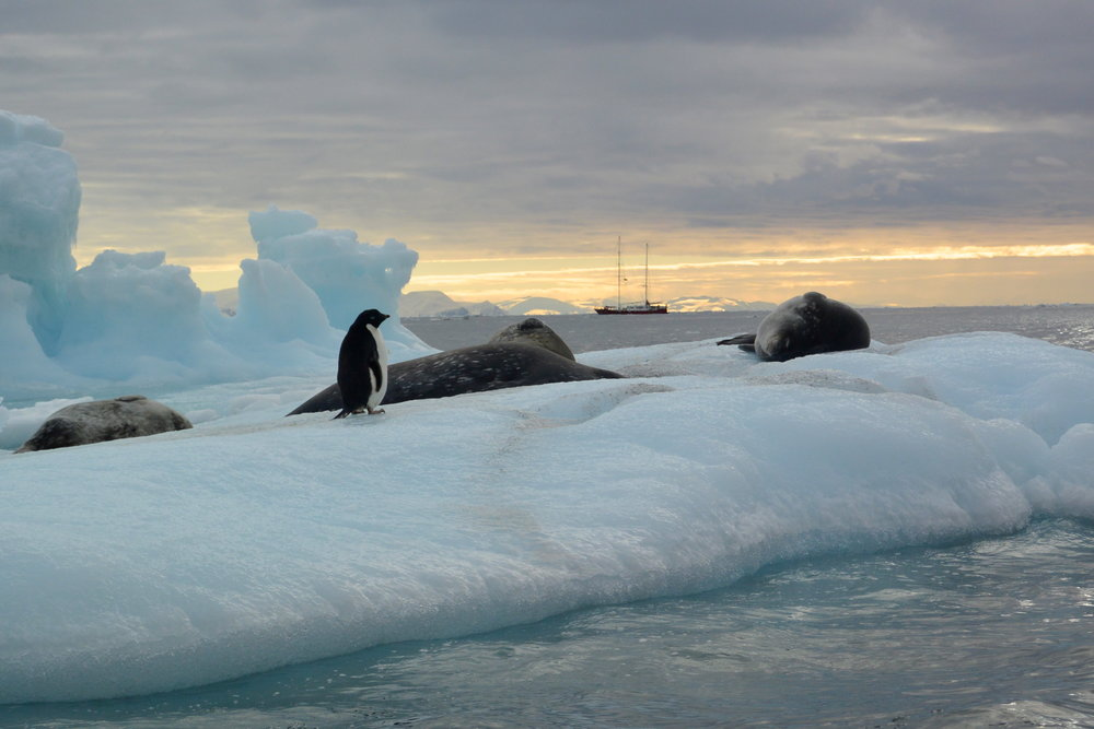on anchor in antarctica.JPG