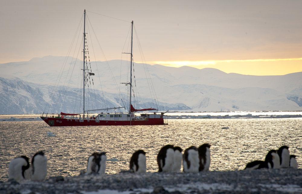 penguin01.jpg