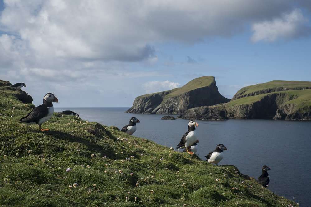 Fair Isle puffins from our trip there in 2017!