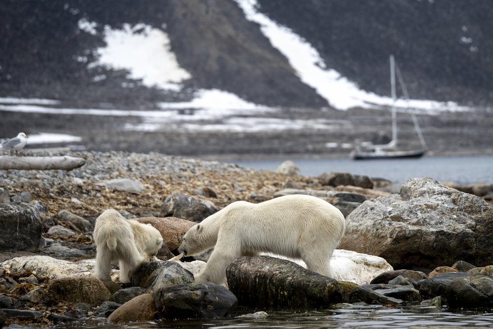 Bear Whale Carcass_2_2500px.jpg
