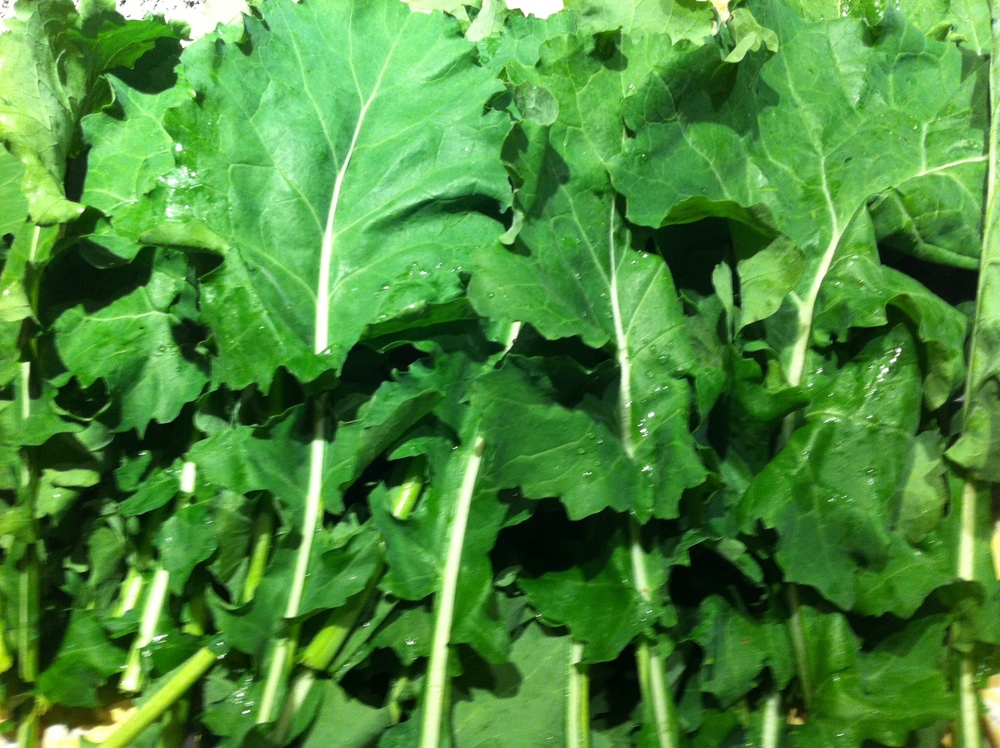 Freshly harvested collard greens