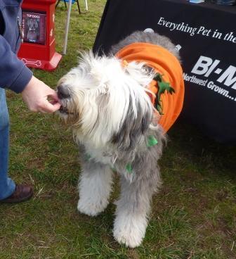 dogpaw dogtoberfest 2011 004.jpg