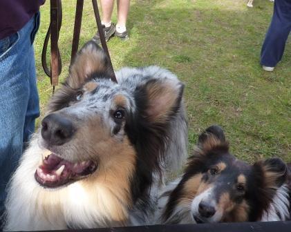 dogpaw dogtoberfest 2011 008.jpg