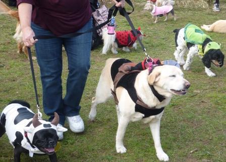 dogpaw dogtoberfest 2011 011.jpg