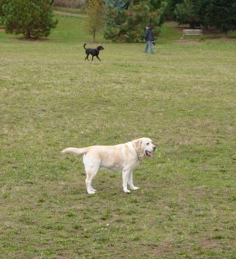 dogpaw dogtoberfest 2011 038.jpg