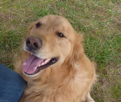dogpaw dogtoberfest 2011 039.jpg