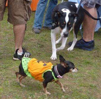 dogpaw dogtoberfest 2011 031.jpg