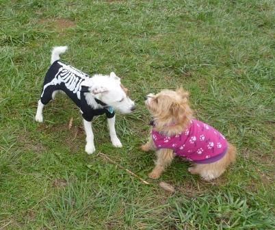 dogpaw dogtoberfest 2011 030.jpg