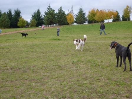 dogpaw dogtoberfest 2011 040.jpg