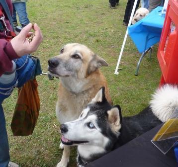 dogpaw dogtoberfest 2011 018.jpg