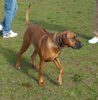 dogpaw dogtoberfest 2011 013.jpg