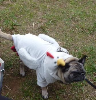 dogpaw dogtoberfest 2011 024.jpg