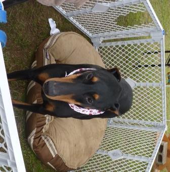 dogpaw dogtoberfest 2011 021.jpg