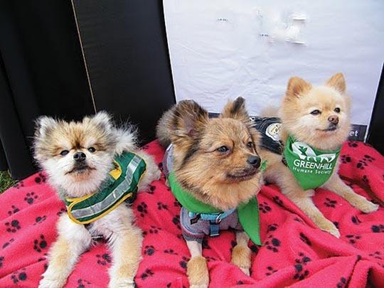 Ralphie, Mac & Wyatt