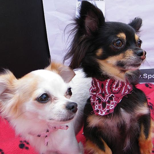 Lexy & Lulu