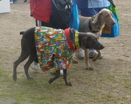 2011 doggie dash 014.jpg