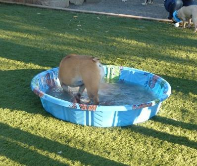 pool pawty 016.jpg