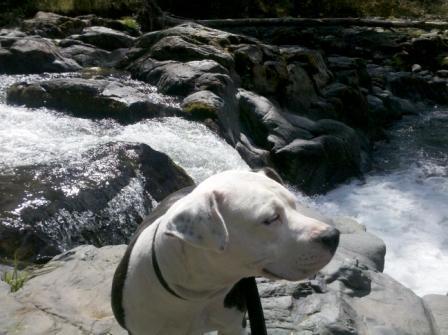 queenie at wildwood falls.jpg