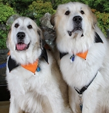 Jasper and Moxie