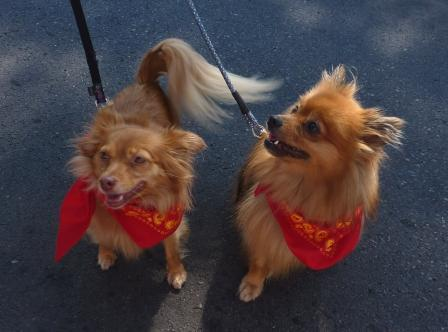 dogtoberfest '11 047.jpg
