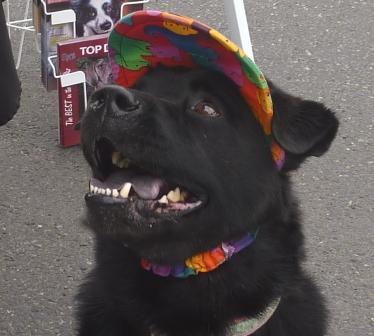 dogtoberfest '11 060.jpg